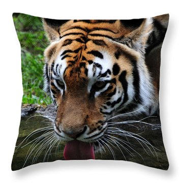 Thirsty Kitty Throw Pillow by Mike Martin