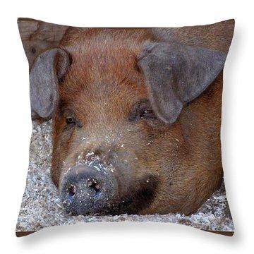 This Little Piggy Took A Nap Throw Pillow