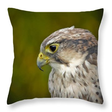 Thoughtful Kestrel Throw Pillow
