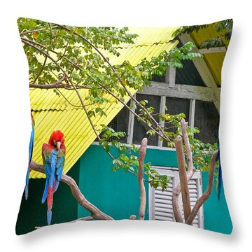 Three Parrots Throw Pillow by Ann Murphy