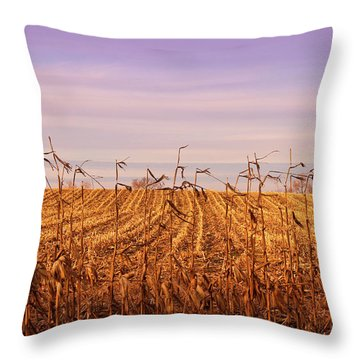 Throw Pillow featuring the photograph Through The Cornfield by Rachel Cohen