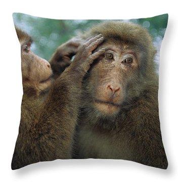 Tibetan Macaque Macaca Thibetana One Throw Pillow by Cyril Ruoso