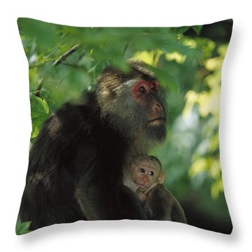 Tibetan Macaque Nursing Baby Throw Pillow by Cyril Ruoso