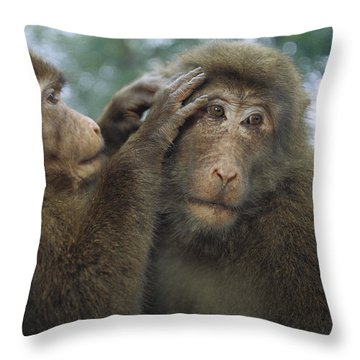 Tibetan Macaques Grooming Throw Pillow by Cyril Ruoso