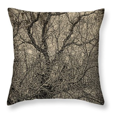 Tickle Of Branches  Throw Pillow by Jerry Cordeiro