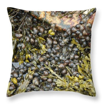 Tidal Pool With Rockweed Throw Pillow by Ted Kinsman