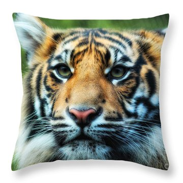 Tiger Throw Pillow by Billie-Jo Miller