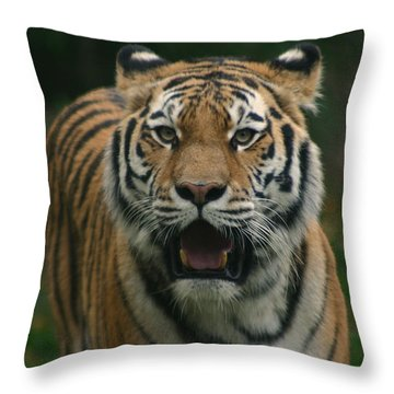 Tiger Throw Pillow by David Rucker