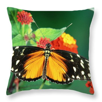 Tiger Longwing Heliconius Hecale Throw Pillow by Michael & Patricia Fogden