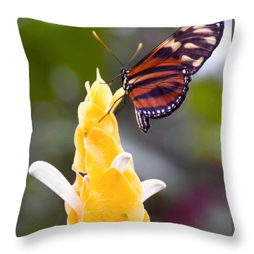 Tiger Longwing Throw Pillow
