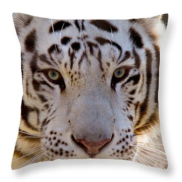 Tiger Stripes Exotic Animal Sanctuary 8 Throw Pillow by Dan Wells