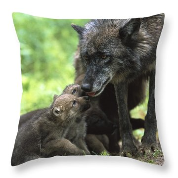 Timber Wolf Canis Lupus Mother Throw Pillow by Konrad Wothe