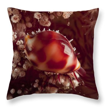 Tiny Cowrie Shell On Dendronephtya Soft Throw Pillow by Mathieu Meur