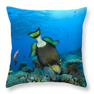 Titan Triggerfish Picking At Coral Throw Pillow by Steve Jones