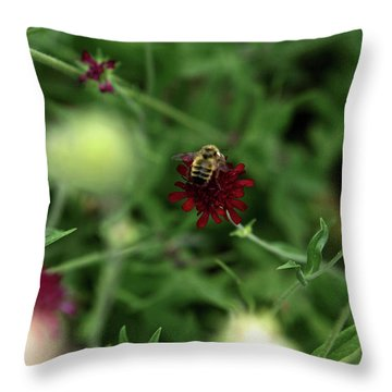 Throw Pillow featuring the photograph To Bee by Lorraine Devon Wilke