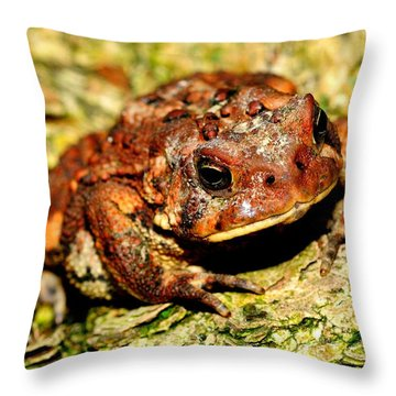 Throw Pillow featuring the photograph Toad by Joe  Ng