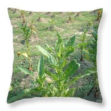 Throw Pillow featuring the photograph Tobacco Addiction by Mark Robbins