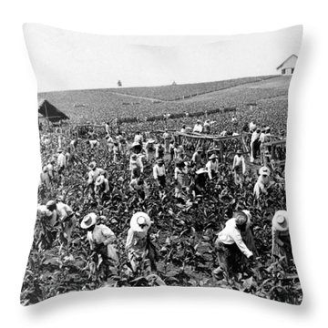 Tobacco Field In Montpelier - Jamaica - C 1900 Throw Pillow