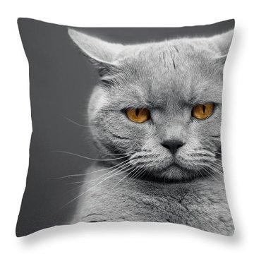 Orange Cat Throw Pillows