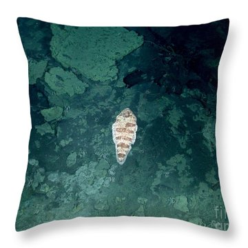 Tongue Fish In Hydrothermal Area Throw Pillow