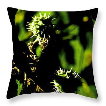 Throw Pillow featuring the photograph Touched By The Late Afternoon Sun by Steve Taylor