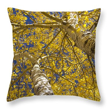 Towering Autumn Aspens With Deep Blue Sky Throw Pillow by James BO  Insogna