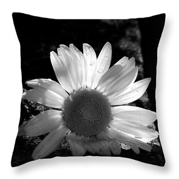 Throw Pillow featuring the photograph Translucent Daisy by Cindy Haggerty