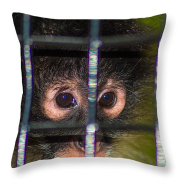 Trapped Throw Pillow by Shannon Harrington