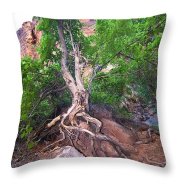 Tree Along The Trail Throw Pillow by Bob and Nancy Kendrick