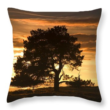 Tree At Sunset, North Yorkshire, England Throw Pillow by John Short