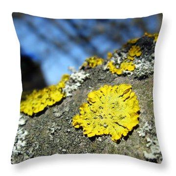Throw Pillow featuring the photograph Tree Lichen by Ausra Huntington nee Paulauskaite