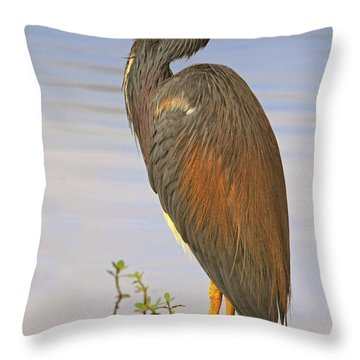 Tricolor Heron Throw Pillow by Dave Mills