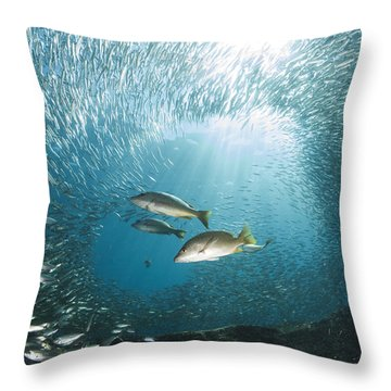 Trio Of Snappers Hunting For Bait Fish Throw Pillow by Todd Winner