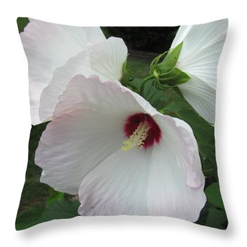Throw Pillow featuring the photograph Triple Light Pink Hibiscus by Tina M Wenger
