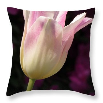 Throw Pillow featuring the photograph Triumph Shirley Tulip by Darleen Stry