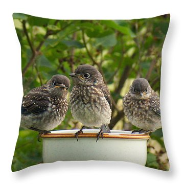 Trouble Times Three Throw Pillow