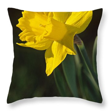 Trumpeting Daffodil Throw Pillow