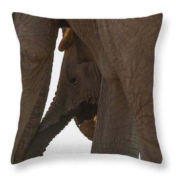 Trunk Touch Throw Pillow