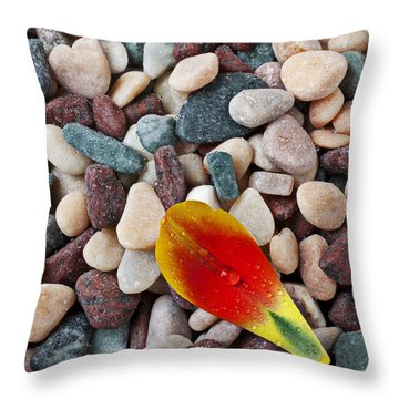 Tulip Petal And Wet Stones Throw Pillow by Garry Gay