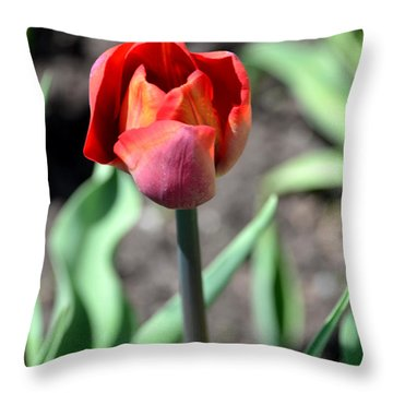Throw Pillow featuring the photograph Tulip by Pravine Chester