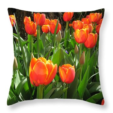 Tulip Time Throw Pillow by Margaret Hodgson