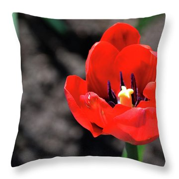 Throw Pillow featuring the photograph Tulips Blooming by Pravine Chester