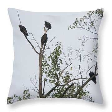 Turkey Vulture - Cathartes Aura Throw Pillow by Mother Nature