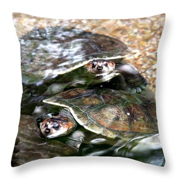 Turtle Two Turtle Love Throw Pillow