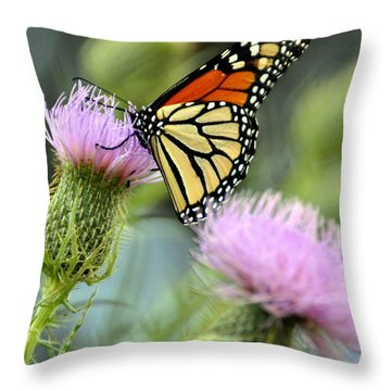 Twin Thistle Butterfly Throw Pillow by Marty Koch