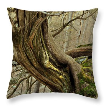 Twisted Cedar Throw Pillow by Marty Koch