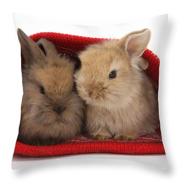 Two Baby Lionhead-cross Rabbits Throw Pillow by Mark Taylor