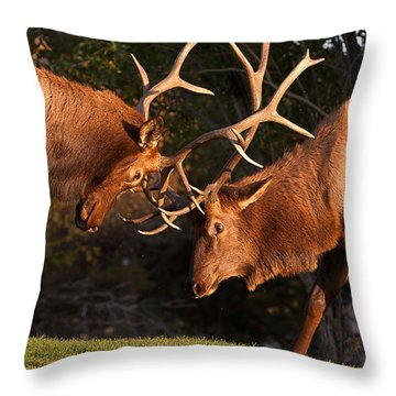 Two Bull Elk Sparring 91 Throw Pillow by James BO  Insogna