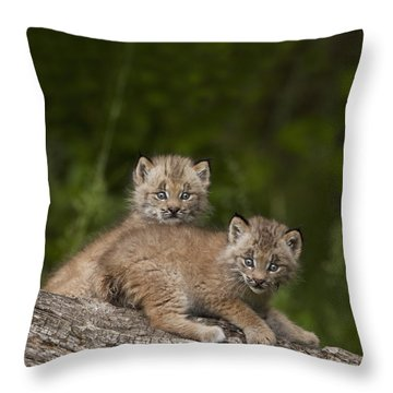 Two Canada Lynx Lynx Canadensis Kittens Throw Pillow by Richard Wear