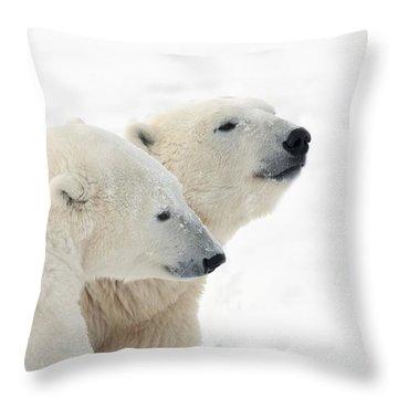 Two Polar Bears Ursus Maritimus Showing Throw Pillow by Richard Wear